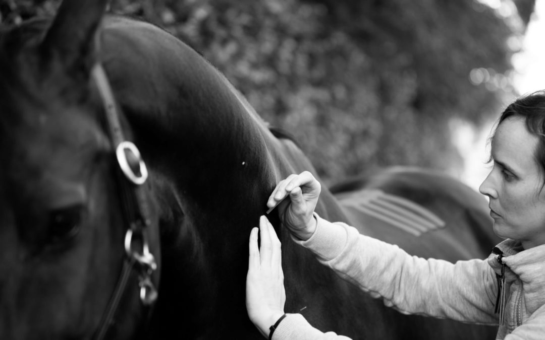 acupunctuur paard medical tape