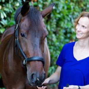 chiropractor paard