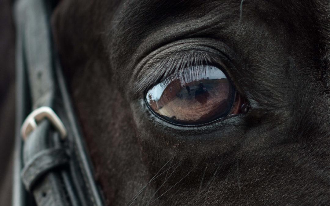 blog slofteugel paard