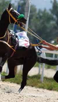 Staakgedrag bij paarden