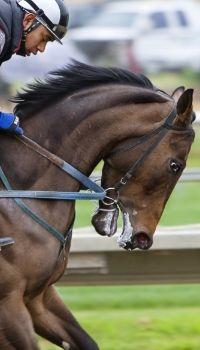 3 Signalen dat je paard mogelijk pijn heeft