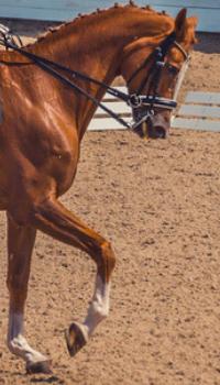 Paardensport en dierenwelzijn