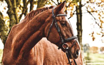 De 5 elementen bij het paard: Metaaltype