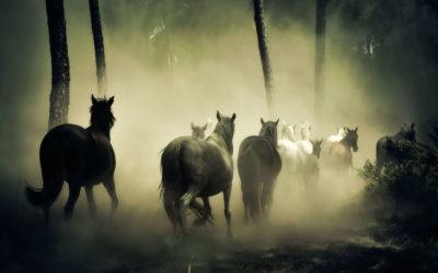 De 5 elementen bij het paard: het Houttype