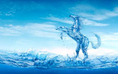 De 5 elementen bij het paard: het Watertype
