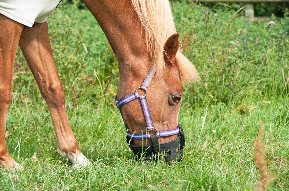 De 5 elementen bij het paard: Aardetype
