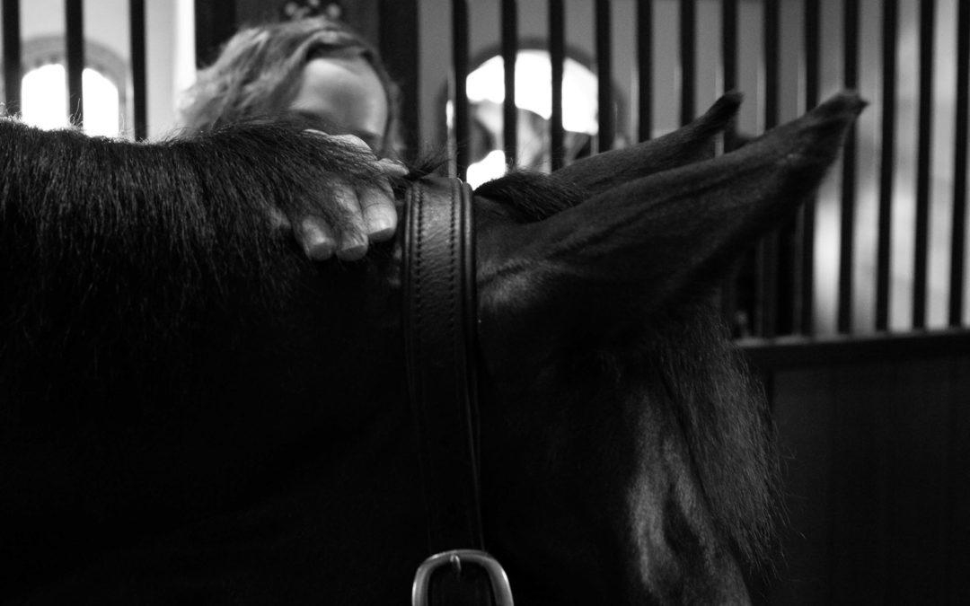 blog atlas paard