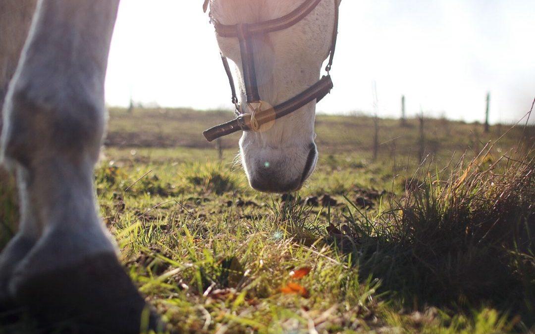 Vrije beweging voor paarden: angst voor blessures…