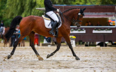 Synovitis in de paardenhals