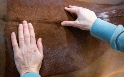 Tips bij rugklachten bij je paard