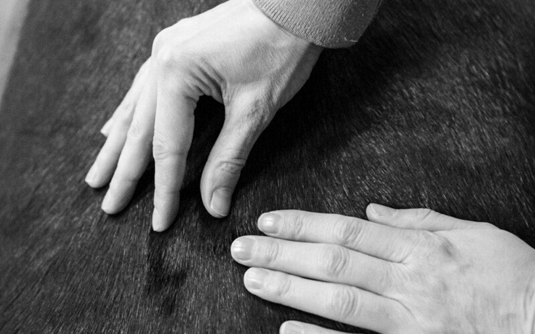 Chiropractie en osteopathie voor paarden