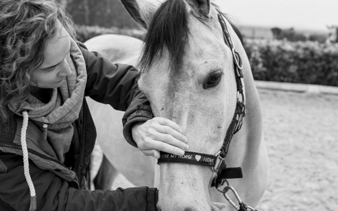 Hoofdpijn bij paarden; hoe te voorkomen?