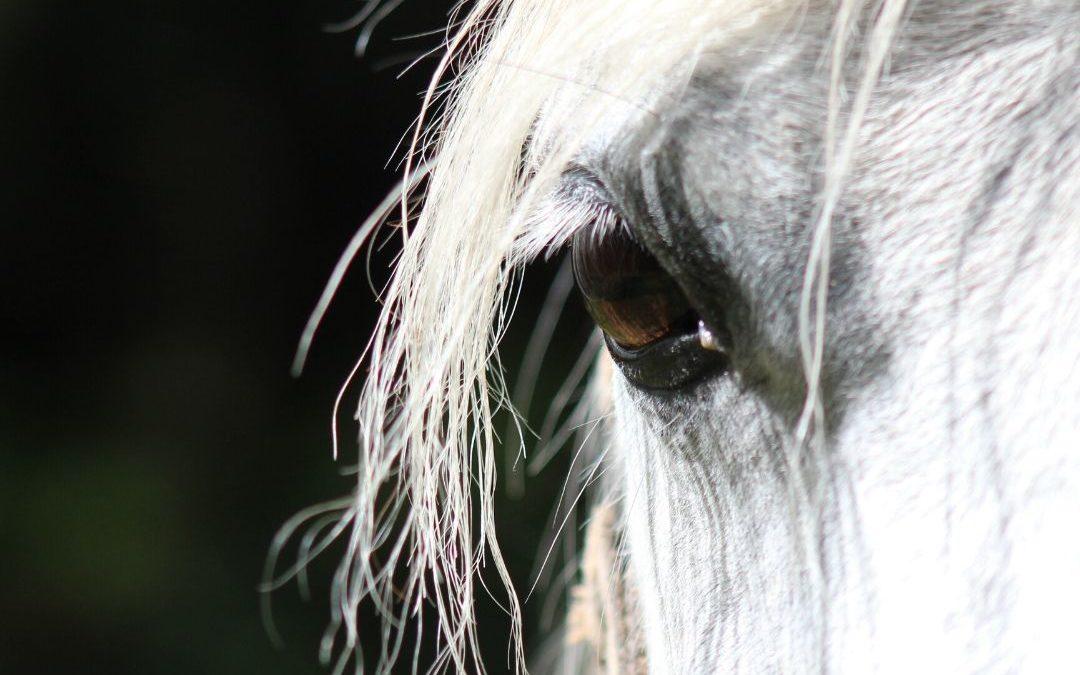 paard corona training