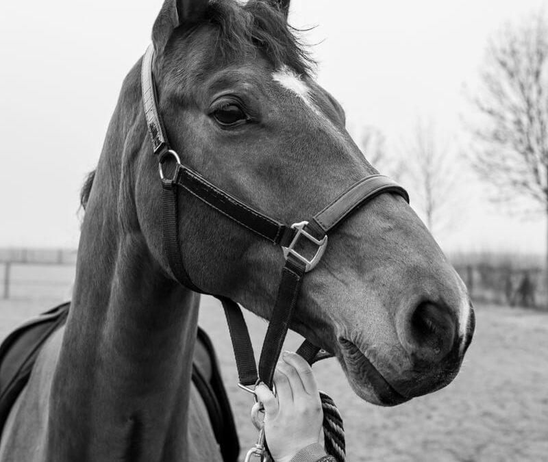 bovenlijn paard video blog