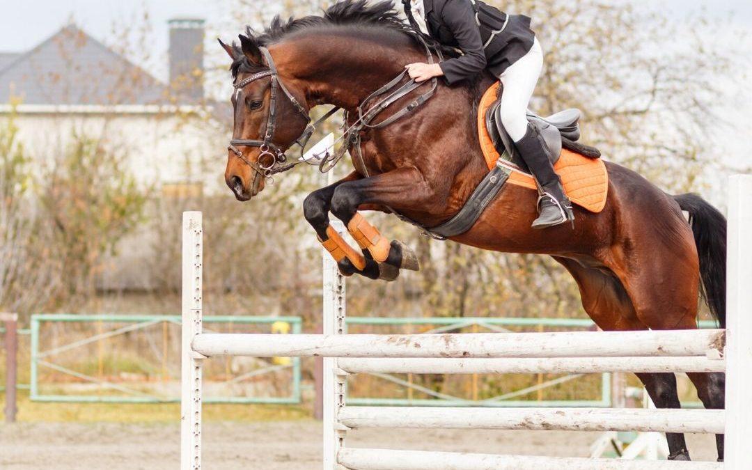 Blessures voorkomen bij je paard
