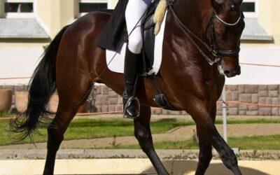 Mijn paard maakt taktfouten…