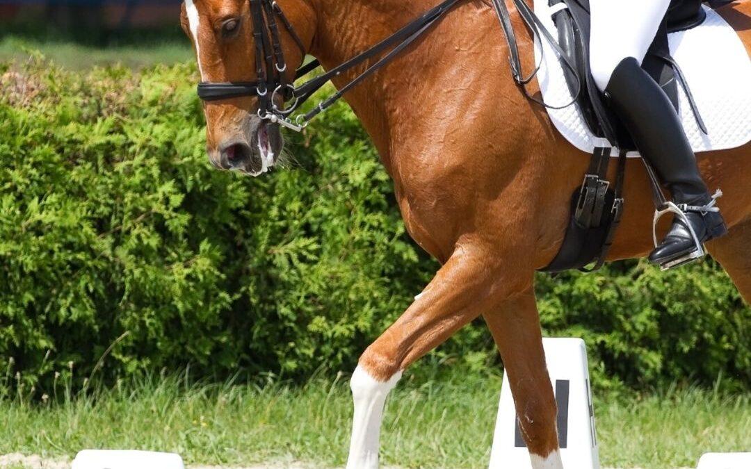 Zijgangen oefenen met je paard, waarom…?