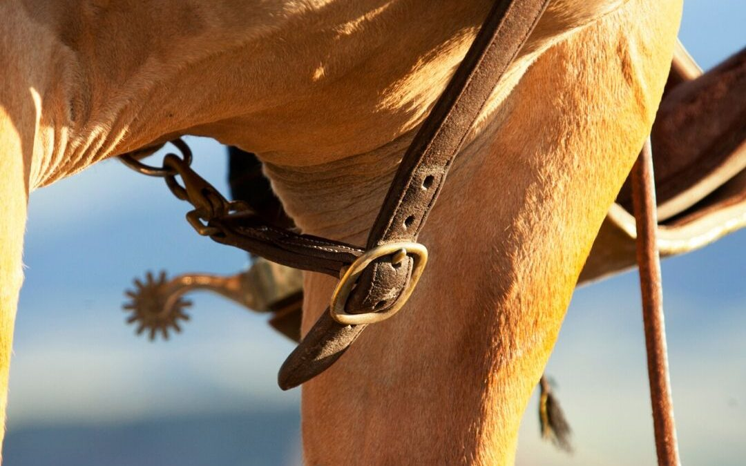 Elektrische sporen en hulpteugels bij het paard.