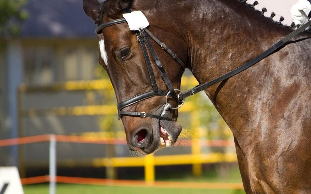 hoofd hals houding paard blog
