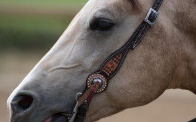Pijnsignalen bij je paard (2)