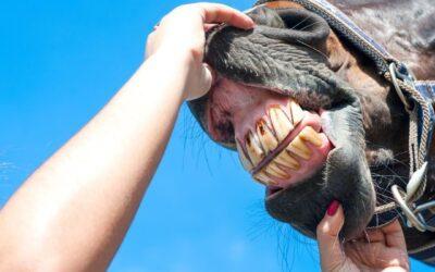 Het belang van een goed gebit bij je paard