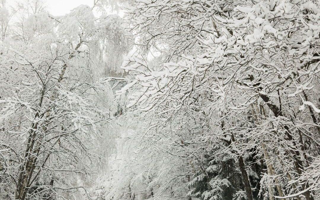Sneeuwtips voor je paard