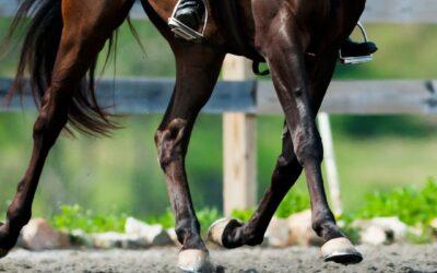 3 signalen van een mogelijke kreupelheid bij je paard