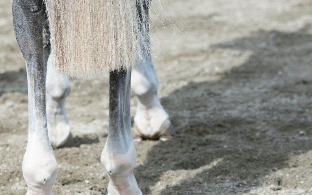 Artrose bij het paard